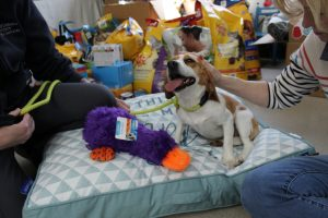 A 'PAW'-fect donation drive benefiting the shelter animals.